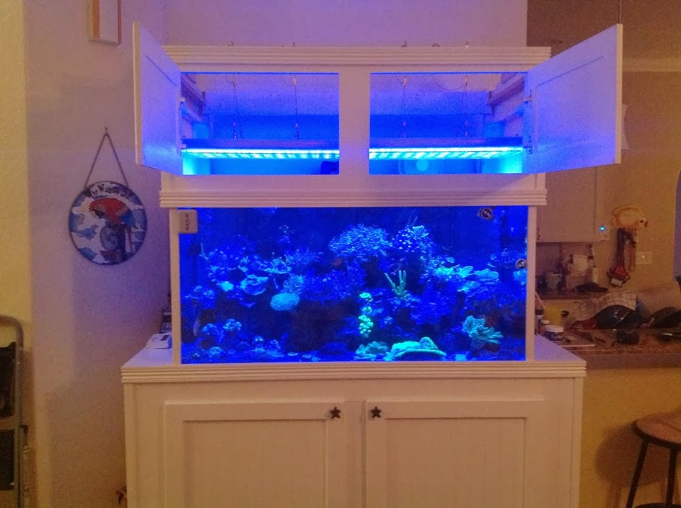 Led aquarium lighting orphek atlantik moonlight & LED Aquarium Lighting Blog | Orphek: Orphek Atlantik Customer post