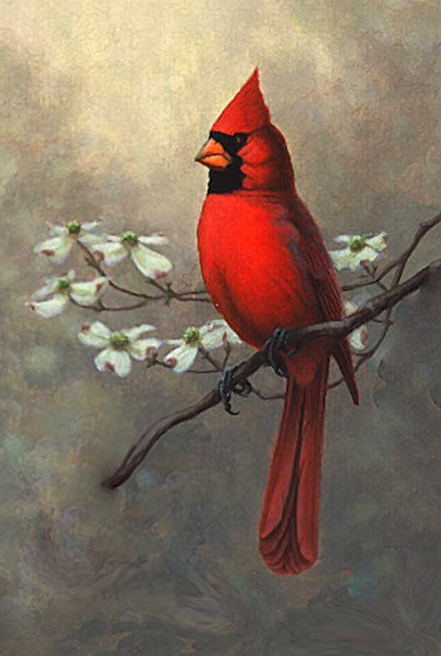 Vintage Cardinal 74