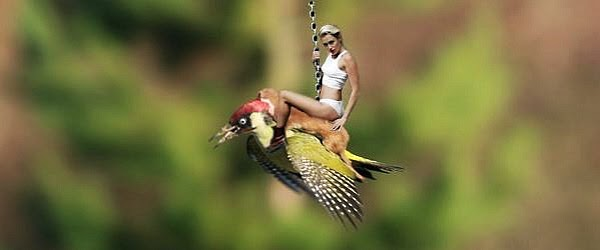 weaselpecker meme of Miley Cyrus riding the weasel and woodpecker with her wrecking ball via geniushowto.blogspot.com wildlife memes