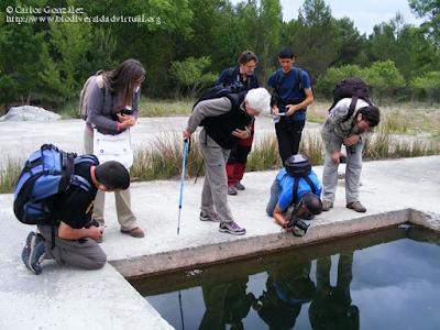 http://www.biodiversidadvirtual.org/insectarium/Participantes-en-el-Testing-del-Punto-BV-Espacio-Pirineos-img584788.html