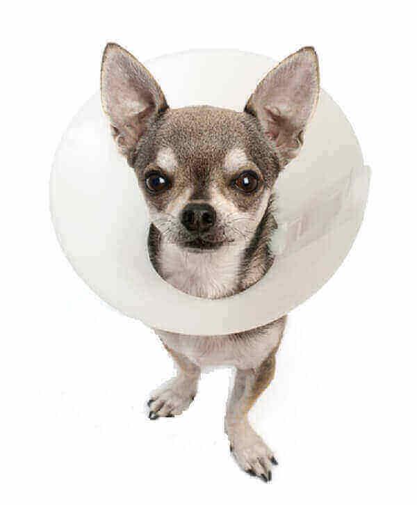 benefits of neutering a dog or sterilizing