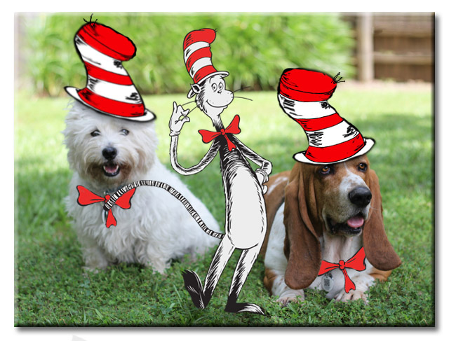 Cat in the Hat with a Westie and Basset in hats