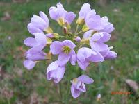 Jolie fleur sauvage en montagne