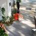 Σάστισαν μέχρι και οι Αστυνομικοί: Τις έπιασαν να κάνουν… Tριo μέρα‑μεσημέρι έξω από ελληνικό εστιατόριο (φωτο & βιντεο)