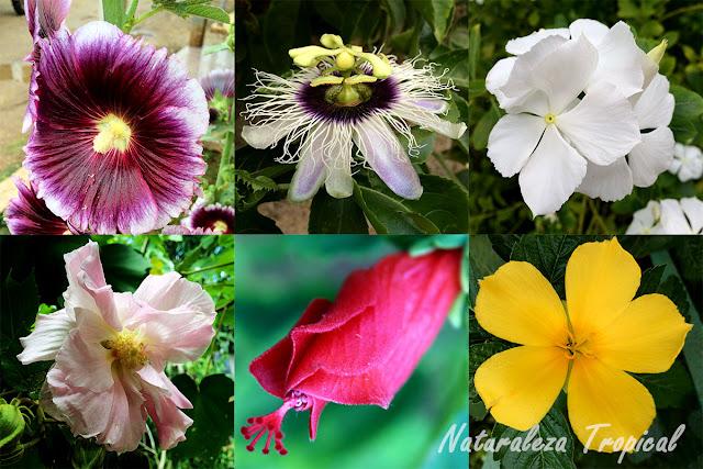 Naturaleza tropical plantas ornamentales con propiedades for Algunas plantas ornamentales