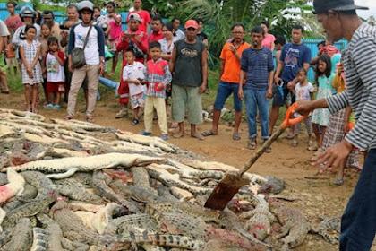 Pembantaian 300 Buaya oleh Warga di Papua Hebohkan Media Dunia
