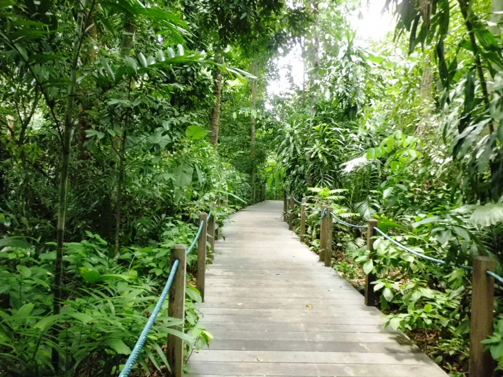 Singapore Botanic Gardens - Rain Forest Walking Trail