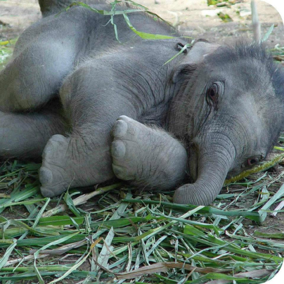 Amazing Animals Pictures: Cute and Big Baby Elephant ...
