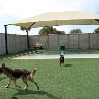 Greatmats artificial grass for dogs to play on