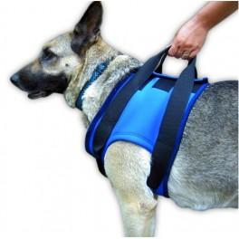 recuperação de músculos em cães