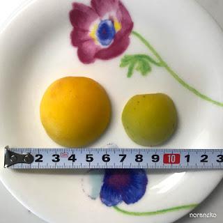 梅の実のサイズを比較