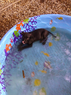 The baby's first pool