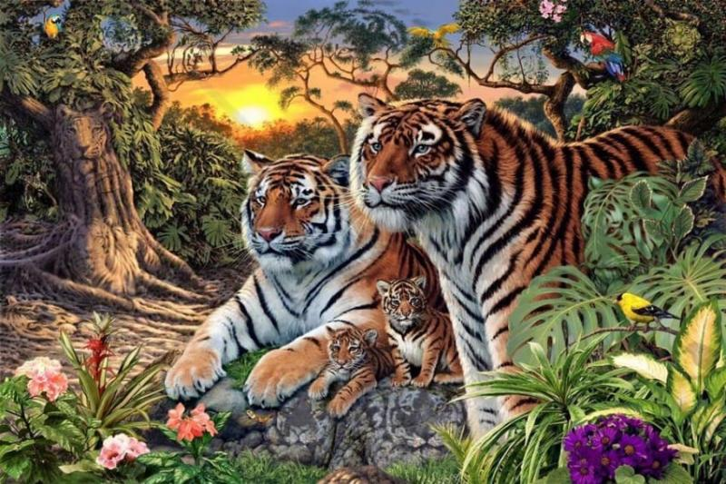 How many tigers do you see?