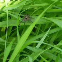 花博記念公園鶴見緑地 風車の丘 クモ