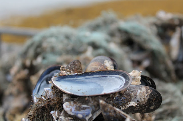 Mussels Ardgroom Cork