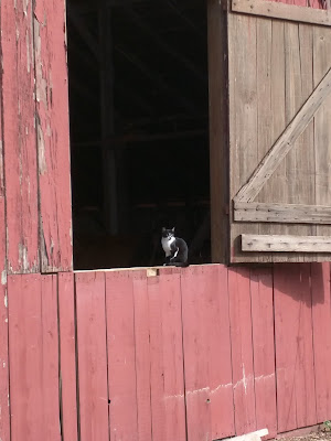 Cat sitting in open door of red barn