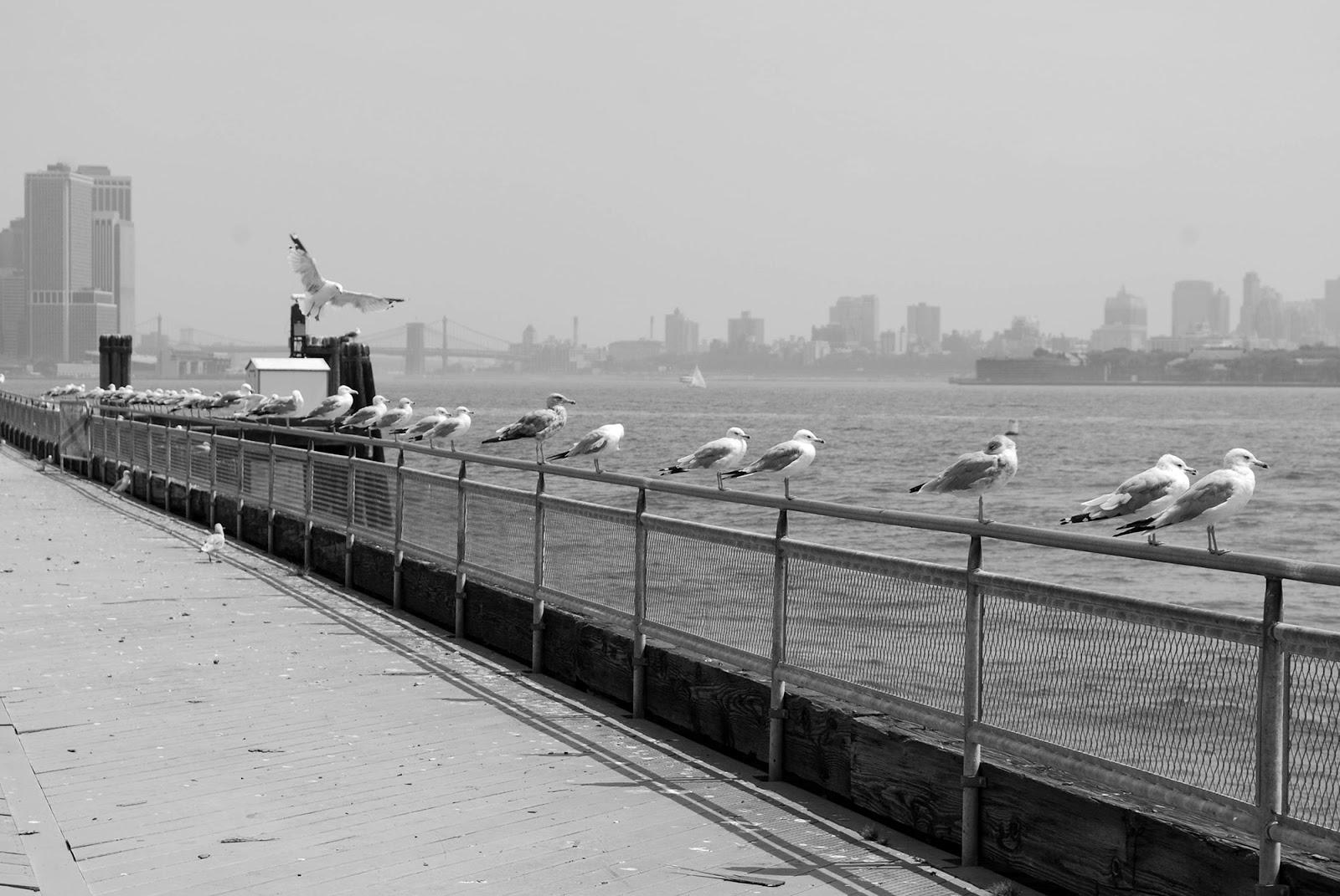 seagull peer nyc black white
