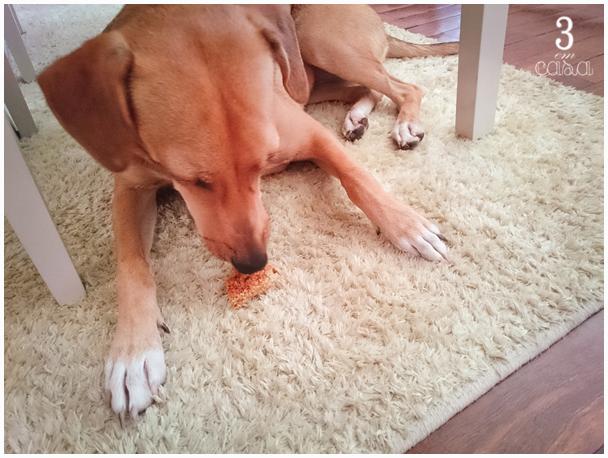 biscoito e cachorro