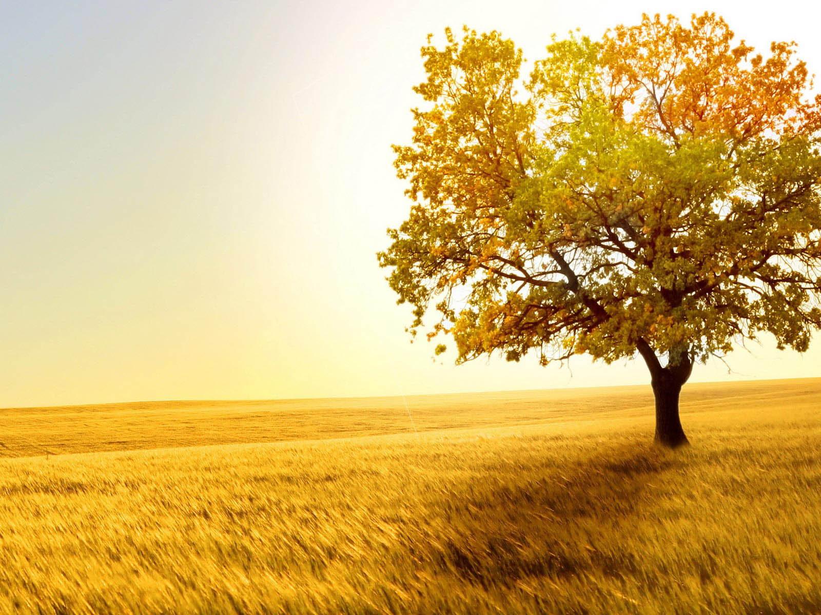 wallpapers: Tree In Field