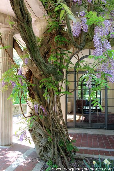 Van Vleck House and Gardens