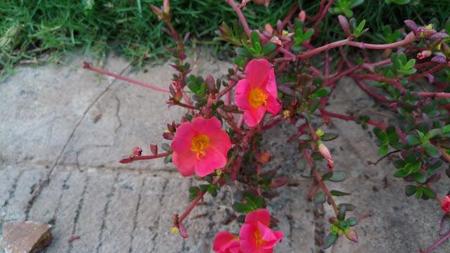 ASUS ZenFone 3 Camera Samples - Closeup - Flower