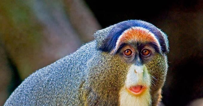 Bmw Blue Cars Wallpapers De Brazza S Monkey Amazing Things In The World