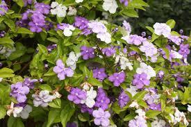 Vivero san andres bondades de las plantas ornamentales for Plantas ornamentales croto