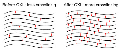 Before and after crosslinking