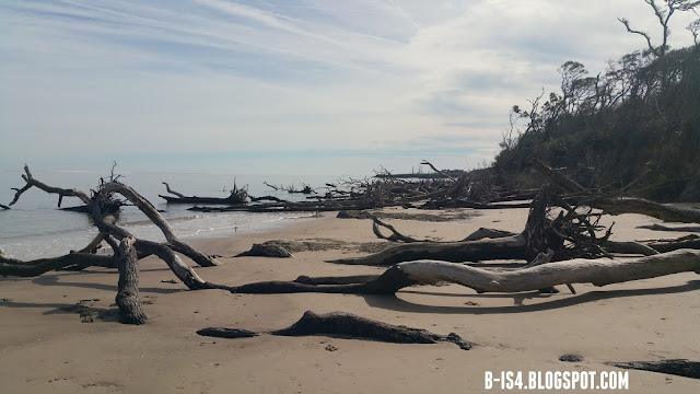 Beach, Driftwood, Jacksonville