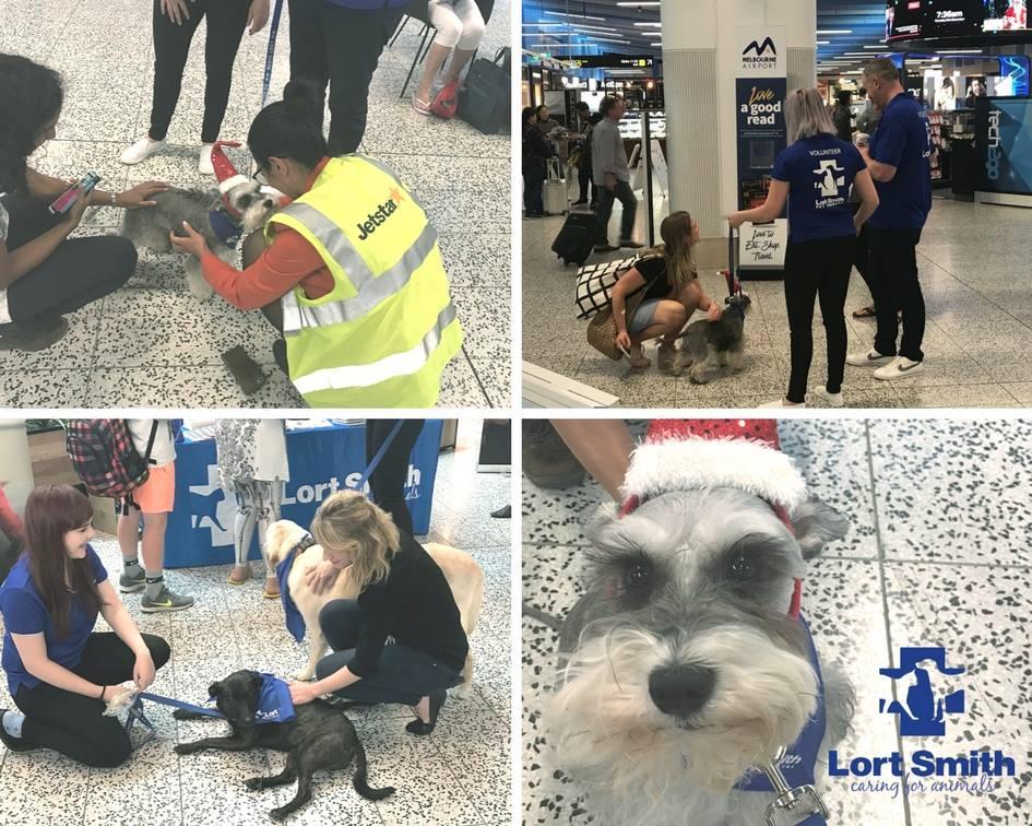 Australian Dog Lover - 25 hilarious brilliantly timed dog photos