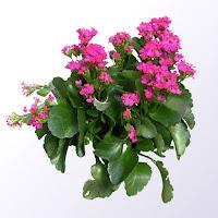 bunga pink - www.jasataman.co.id