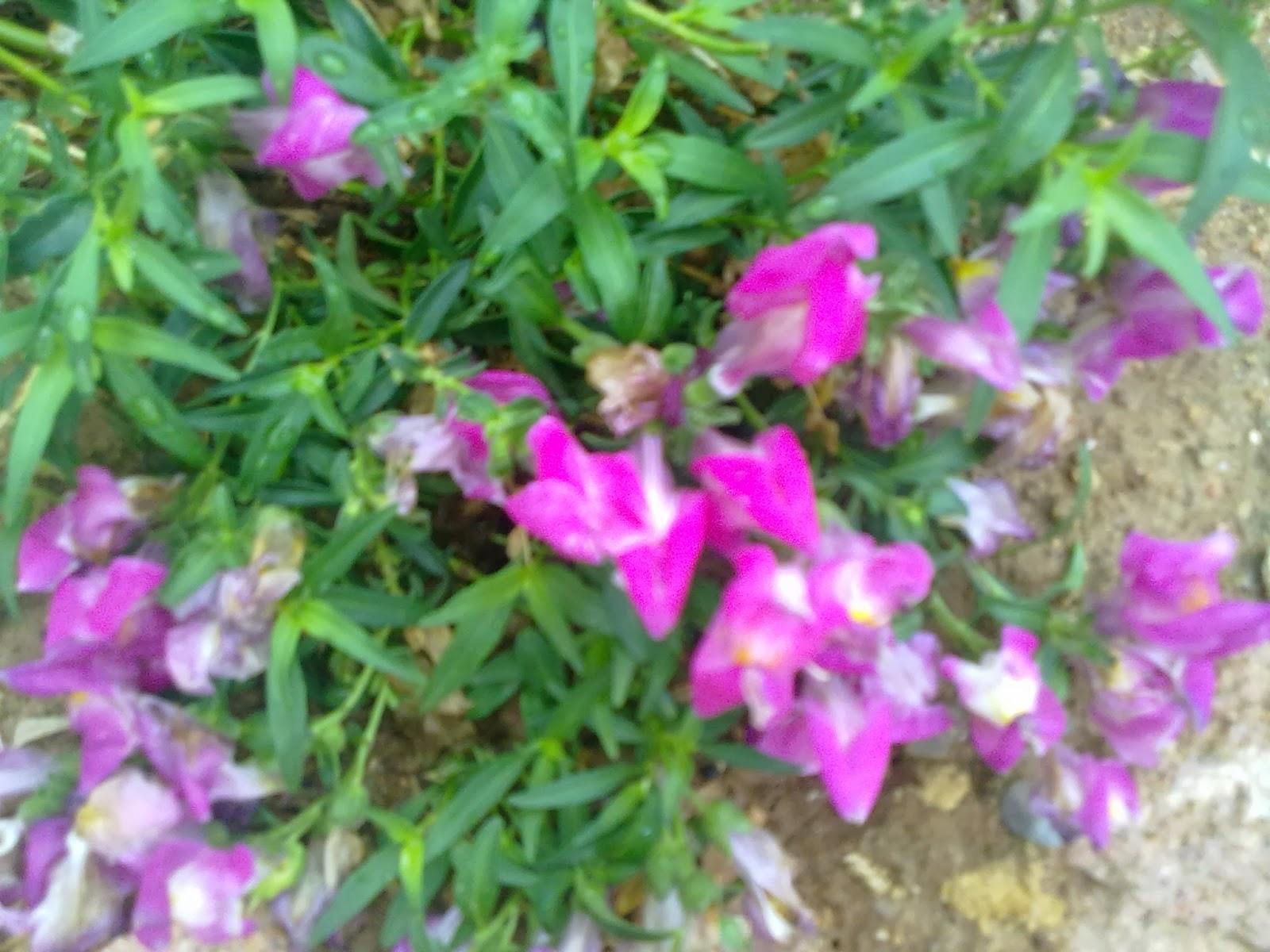Flores Para Primavera Y Verano Entre Patios Y Plantas