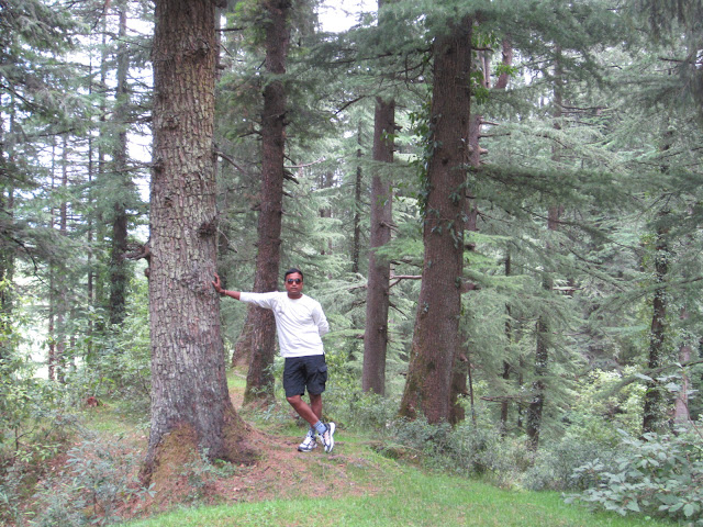 forest near khazzar