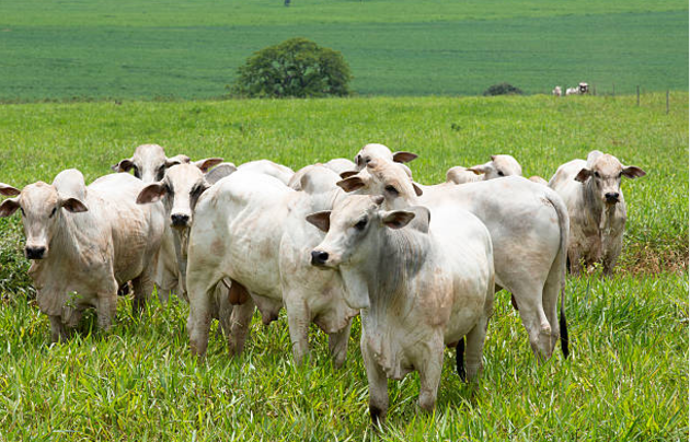 vetarq-bovinos-livros-veterinaria-pdf