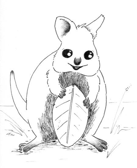 Doodles And Doggerel: Quokka