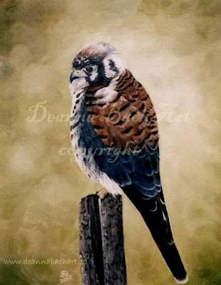 Sparrow Hawk by Deanna Bach-Talsma