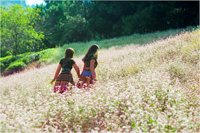 Tháng 9 lên Mộc Châu dự Tết Độc Lập và ngắm hoa Tam Giác Mạch