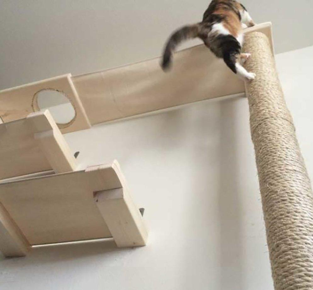 Indoor Cat Gets Excited Seeing Outdoor Cats