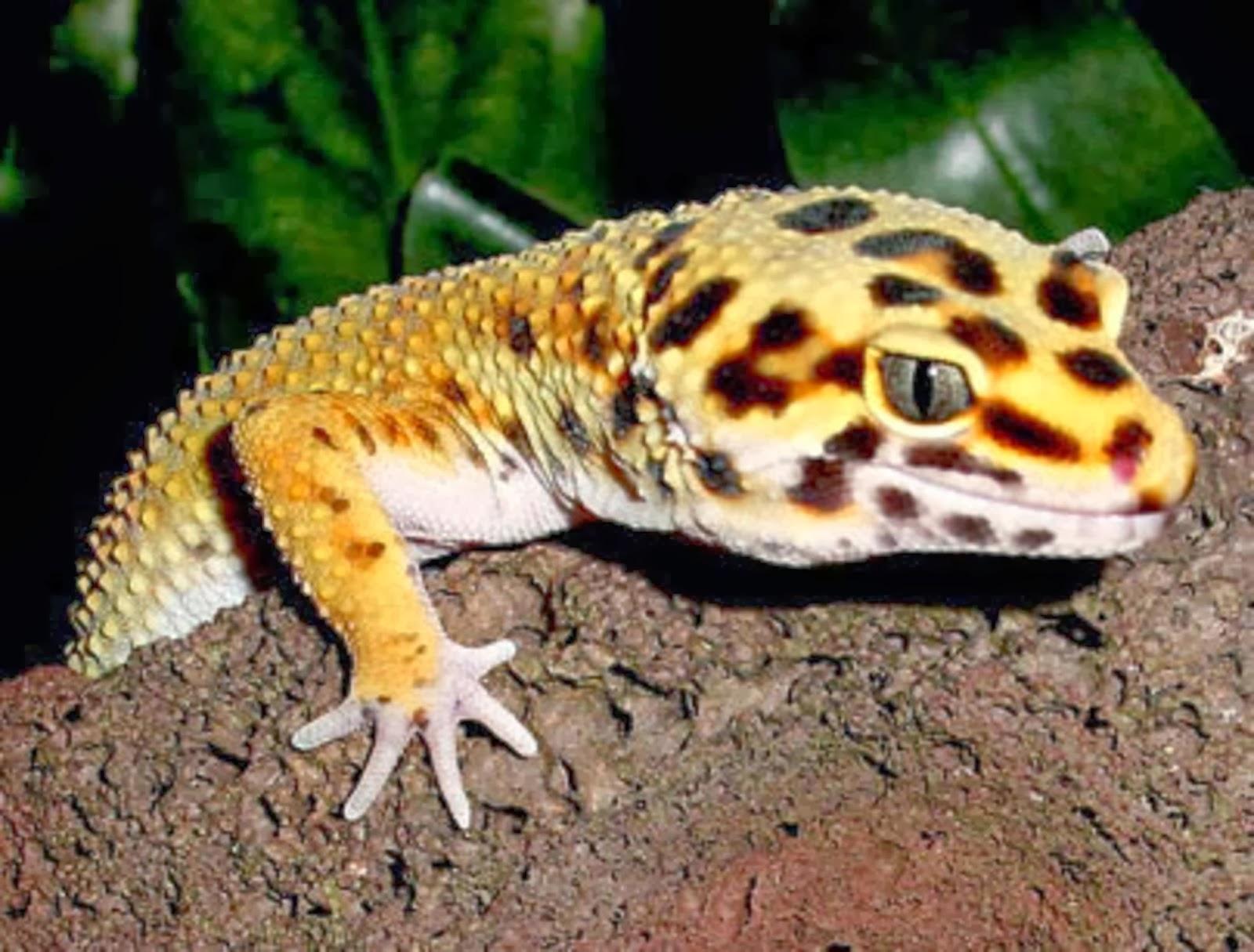 3d Celebrity Wallpapers Gecko Hd Wallpapers Hd Wallpapers Blog