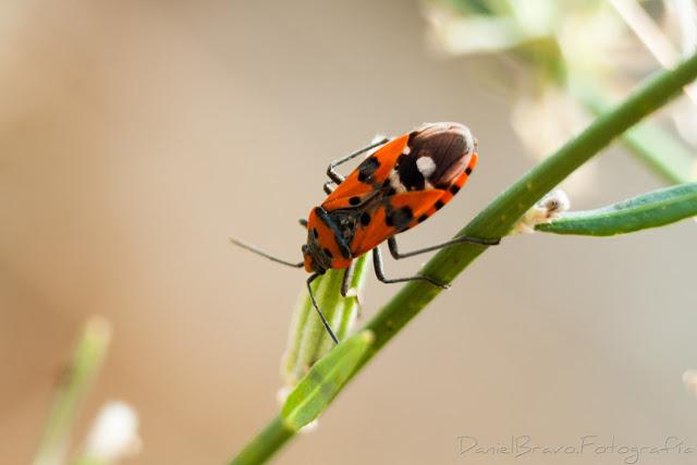 Fotografía macro de un insecto sobre el tallo verde de una planta