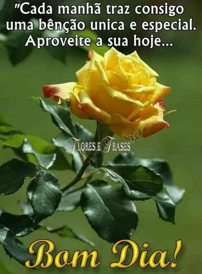 Tag Frases De Bom Dia Com Flores Do Campo
