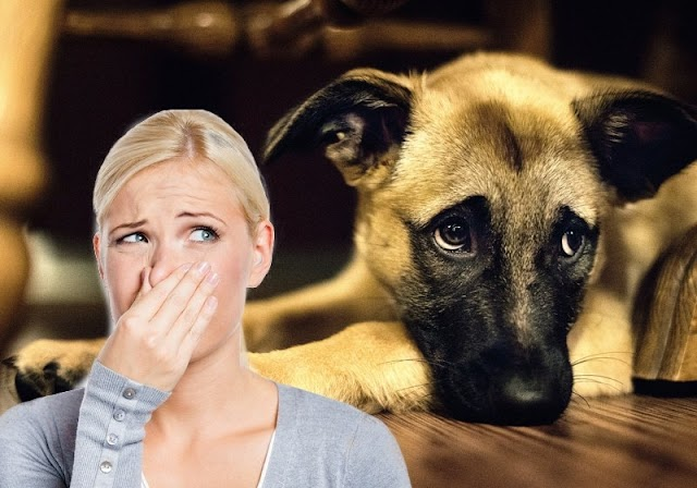 #Health & #Pet : Ultimate tips to eliminate embarassing #pet odors !