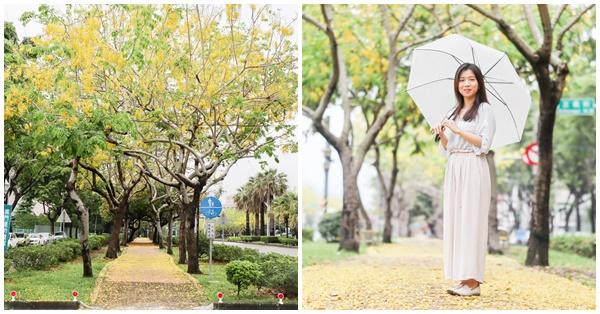 台中南區興大綠園道賞阿勃勒黃金雨,黃金花毯大道美照好好拍