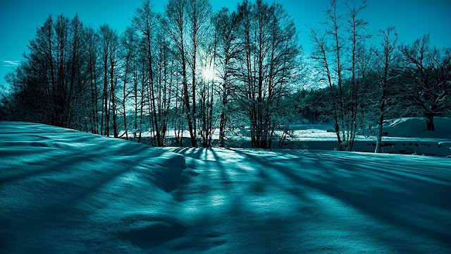 Winter wallpaper met bomen en sneeuw bij een laagstaande zon.