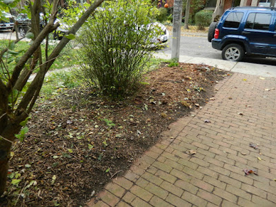 Toronto Paul Jung Gardening Services The Annex Front Garden Fall Cleanup after