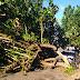 Árvore caiu na rua José Borges, Lagoa Nova