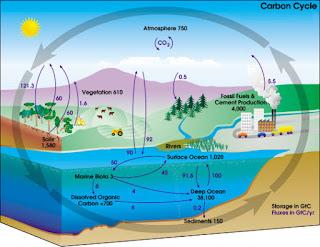 Daur Nitrogen, Daur Fosfor, Daur Karbon, dan Daur Sulfur