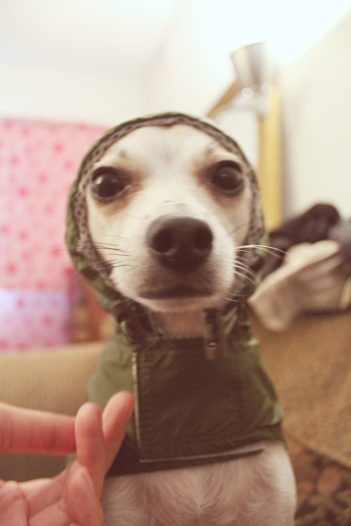 Cute Dog Rain Jacket