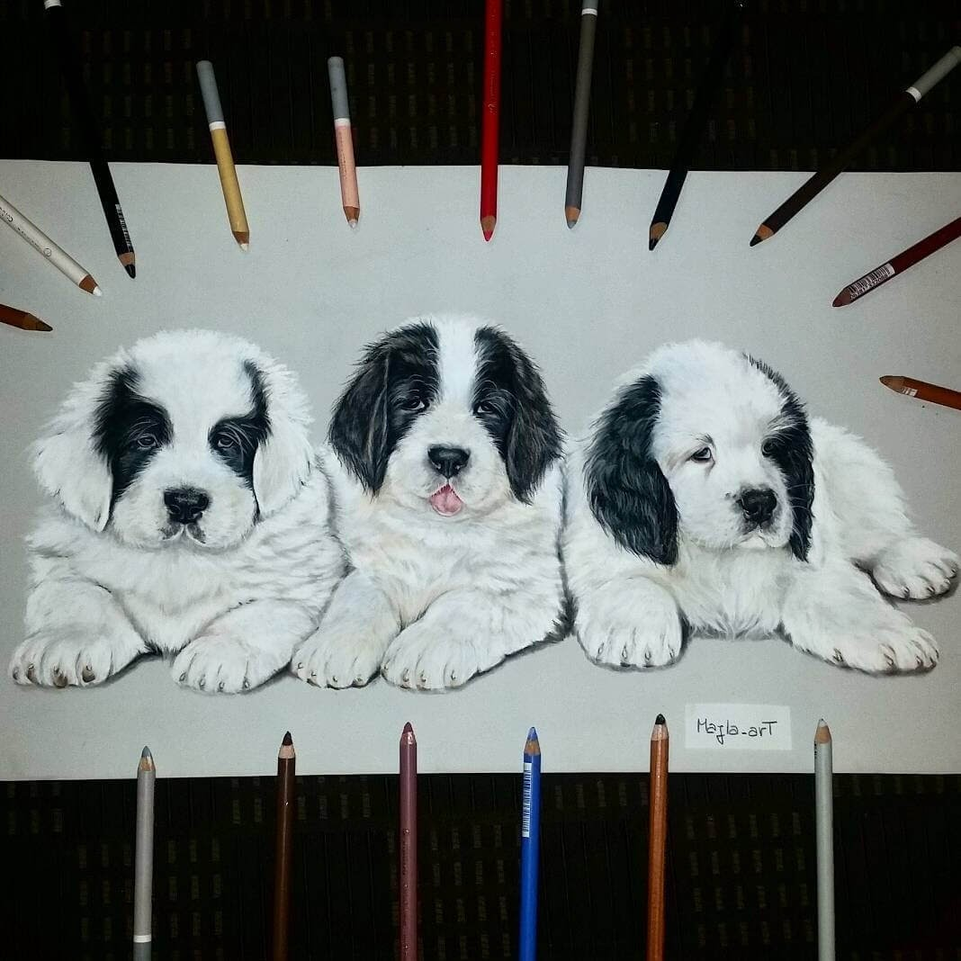 03-3-Puppies-Landseer-dogs-Majla-Colorful-Precise-and-Realistic-Animal-Drawings-www-designstack-co