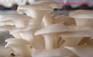 jamur, vitamin, vitamin D, vitamin H, vitamin B, manfaat jamur untuk ibu hamil, manfaat makan jamur untuk kesehatan